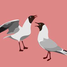 Black-headed Gulls | Flickr - Photo Sharing!