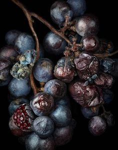 [photography (!) by Peter Lippmann @ http://www.peterlippmann.com/ ]