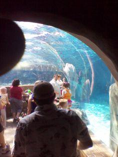 St. Louis Zoo Sea lion exhibit