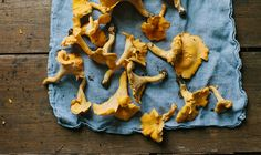 The Surprising Health Benefits Of Foraging (And How To Get Started) Hero Image