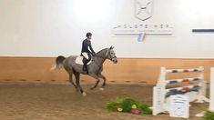 Equestrian Purgatory — Crawssina (s. Cassini I) Horses Jumping Videos, Horse Videos, Show Horses, Equestrian Problems, Equestrian Style, Hunt Seat, Cute Ponies, Animal Room, English Riding