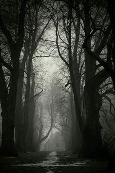 "bonitavista: "" The Black Forest, Germany photo via sonja "" Dark Photography, Black And White Photography, Dark Places, Jolie Photo, Black Forest, Dark Wood, Pretty Pictures, Mists, Scenery"