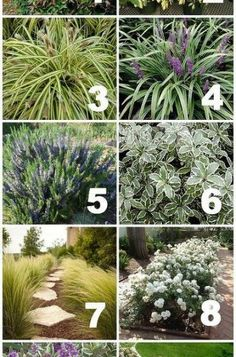 Front Yard Landscaping native drought tolerant plants for your yard, gardening, landscape Mailbox Landscaping, Florida Landscaping, Country Landscaping, Garden Landscaping, Landscaping Ideas, Luxury Landscaping, Landscaping Company, Landscaping Around Pool, Low Water Landscaping