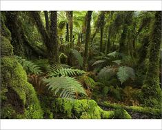 Photograph-New Zealand, South Island, West Coast, native Photo Print expertly made in the USA New Zealand South Island, Native Plants, Cactus Plants, West Coast, Nativity, Framed Prints, Photoshoot, Fine Art, Wall Art