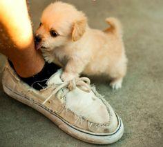 i want him :)