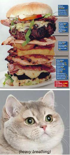 38e7297b26a8db3173685dab98ba8dc0 heavy breathing cat cat food i can has cheezeburger? weirdo cat guy pinterest heavy