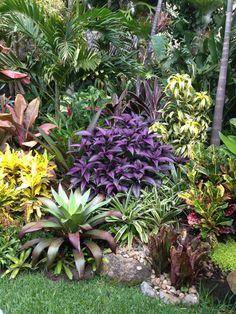 Tropical garden Ideas, tips and photos. Inspiration for your tropical landscaping. Tropical landscape plants, garden ideas and plans. Tropical Backyard Landscaping, Tropical Garden Design, Florida Landscaping, Landscaping Plants, Front Yard Landscaping, Landscaping Ideas, Tropical Plants, Florida Gardening, Small Tropical Gardens