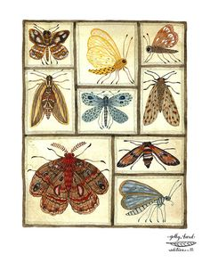 moths entomology specimens collection print by golly by GollyBard, $36.00