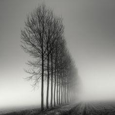 Туманные деревья / Pierre Pellegrini