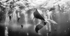 Baleine, catcheurs et Voie lactée... les lauréats du concours du National Geographic Traveler