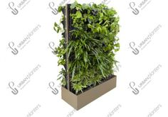 A living wall on the move! Our floor-standing mobile systems can be flexible to your needs and used to create single or multi-sided, healthy green screens and partitions. Urban Planters, Mobile Living, Living Walls, Herbs, Street, Plants, Plant Wall, Herb, Roads