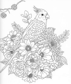 Harmony Of Nature Adult Coloring book Pg 31 Free Adult Coloring, Printable Adult Coloring Pages, Bird Coloring Pages, Coloring Books, Bird Embroidery, Embroidery Patterns, Animal Sketches, Colorful Pictures, Drawings