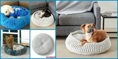 Easy Pet Bed Free Crochet Patterns A set of Straightforward Pet Mattress Free Crochet Patterns. Crochet these pet mattress to your cats or canine that your little fur relations can't re. Crochet Dog Sweater Free Pattern, Crochet Giraffe Pattern, Crochet Shark, Crochet Crocodile Stitch, Crochet Mug Cozy, Crochet Unicorn, Cute Crochet, Crochet Baby, Crochet Poncho