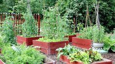 26 Great ideas for a vegetable garden in DIY wooden beds Garden Trees, Garden Plants, Herb Garden, Vegetable Garden, Home Deco, Large Greenhouse, Baumgarten, Wooden Diy, Wooden Beds
