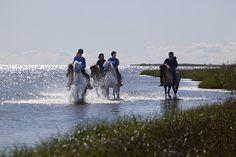 Horseback riding in Denmark.