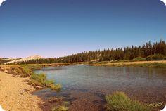 National Park California by mgverspecht, via Flickr