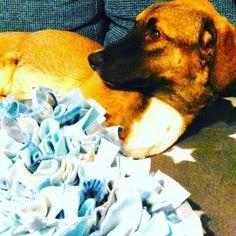So ein #schnüffelteppich ist echte #geduldsarbeit und #fleißarbeit aber wenn's den #hund #glücklich macht ...😊 #xxxlhundeliebe #ilovemydog