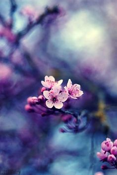 color palate for wedding cherry blossom flowers Pretty Flowers, Pink Flowers, Art Flowers, Vintage Flowers, Colorful Flowers, Paper Flowers, Belle Photo, Pretty Pictures, Flower Power