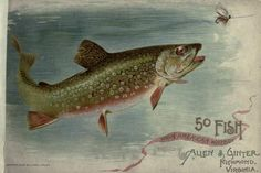 50 fish from American waters. - Biodiversity Heritage Library