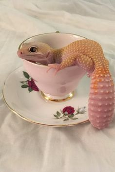 23 Pictures That Prove Lizards Are Very Good Boys
