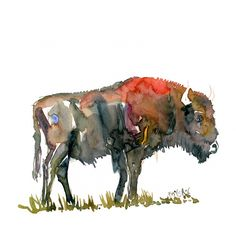 Buffalo sideview Wildlife Watercolor