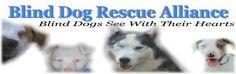 Blind Dog Rescue