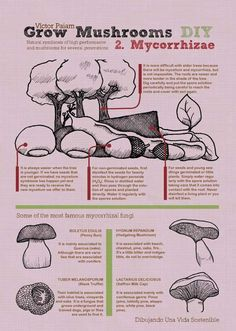Perfect Fungus - infographics provided on page in both Spanish and English.  Check out the HQ version in: http://victorpaiam.blogspot.com.es/2013/03/infografia-cultiva-setas-en-casa.html