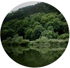 Circle view into the forest