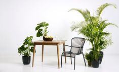 Vincent's Garden | Let's go outside | Loop dining chair