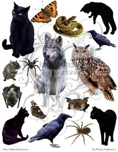 The Witches Companion Digital Collage Sheet JPG by indigochyld, $2.50