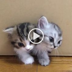 Cats And Kittens Free To Good Home; Cats And Kittens In Waterlooville Area among Cute Things To Draw Easy Animals Funny Cats And Dogs, Cute Cats And Kittens, I Love Cats, Kittens Cutest, Cute Funny Animals, Cute Baby Animals, Animals And Pets, Easy Animals, Rare Cat Breeds