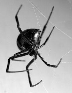 dona aranha.