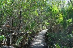 Boardwalk at Grand Bahama Island National Park.
