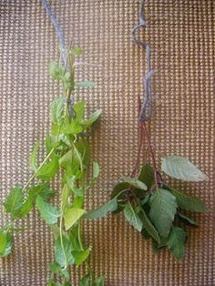 Beginner's Guide to Drying Herbs
