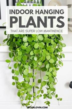 Looking for an indoor plant you can't kill? Check out these top 7 indoor hanging plants that are super easy to take care of! The best indoor hanging plants that will bring life into your home. These Low maintinence hanging plants are easy for beginners. Best Indoor Hanging Plants, Outdoor Plants, Garden Plants, Indoor Plant Decor, Easy Care Indoor Plants, Small Indoor Plants, Indoor Flowering Plants, Indoor Herbs, Indoor Flowers