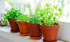 5 plantas aromáticas básicas para tener en casa: Tomillo, Salvia, Menta, Hierbabuena, Romero