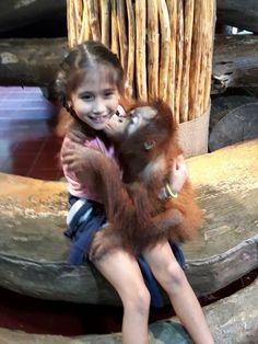 Kisses from a baby oranghutan... Too cute!