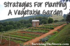 Figure Out Your Planting Strategy {Surviving The Stores Through Gardening Different ways to efficiently use smaller spaces when planting a vegetable garden!Different ways to efficiently use smaller spaces when planting a vegetable garden! Fruit Garden, Edible Garden, Organic Farming, Organic Gardening, Urban Gardening, Vegetable Gardening, Farm Gardens, Outdoor Gardens, My Secret Garden