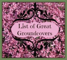 Recommended Groundcovers |  For seed giveaways, daily tips and plant info, come join us on facebook! https://www.facebook.com/thegardengeeks