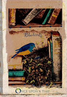 Bluebirds and books | Flickr - Photo Sharing!