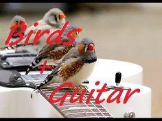 3 HOURS  ~ Relaxing Guitar + Nature Sounds ~ Birds ~ Bird Sounds