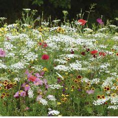 Yksivuotinen, kostea niitty/Damp meadow with annuals. Exotic Garden.