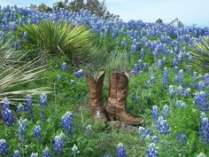 cowboy boots & bluebonnets...