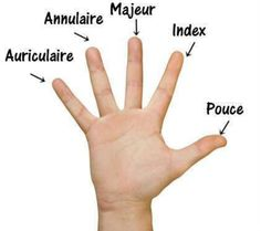 Learn French With The Sims – French Body Vocabulary + Video fingers-french Basic French Words, French Phrases, French Quotes, French Language Lessons, French Language Learning, French Lessons, German Language, Spanish Lessons, Japanese Language