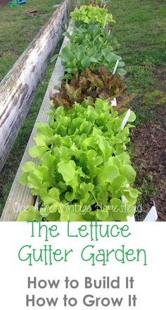 How To Urban Garden Lettuce Gutter Garden: How to Build It, How to Grow It! - One Acre Vintage Homestead - Upcycle old and used gutters into a simple lettuce gutter garden. Install this upcycled gutter garden anywhere to grow all your loose leaf plants. Gutter Garden, Veg Garden, Edible Garden, Garden Beds, Veggie Gardens, Potager Garden, Garden Plants, Pot Plants, Garden Tools