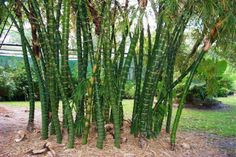 Do you reckon bamboo appears amazing? Have a look at our 15 landscaping design ideas that include are living bamboo into your backyard. Bamboo is an spectacular vegetation that can be noticed in a … Plants Near Me, Big Plants, Flowering Plants, Bamboo Landscape, Landscape Design, Bamboo Plants For Sale, Bamboo Plant Care, Hello Hello Plants, Plants Grown In Water