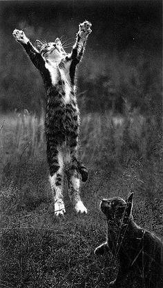 Pentti Sammallahti :: Koylio, Finland, (Kitty Jumping), 1973