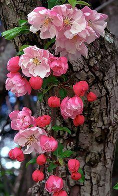 Purple Flowers Wallpaper, Flower Background Wallpaper, Pink Flowers, Beautiful Rose Flowers, Romantic Flowers, Amazing Flowers, Pink Nature, Flowers Nature, Spring Grove Cemetery