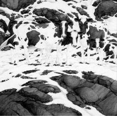 ¿Cuántos animales eres capaz de ver en este dibujo? Imagenes de humor
