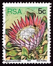 South Africa Circa 1977 Stamp Printed Stock Photo (Edit Now) 166920977 Protea Art, Protea Flower, Rare Stamps, Vintage Stamps, Union Of South Africa, South Afrika, King Protea, Stamp Printing, Flower Stamp